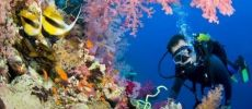 Diving tours in Cuba
